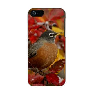 Male American Robin in Black Hawthorn 2 Incipio Feather® Shine iPhone 5 Case