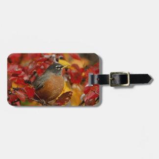 Male American Robin in Black Hawthorn 2 Luggage Tag