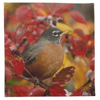 Male American Robin in Black Hawthorn 2 Napkin