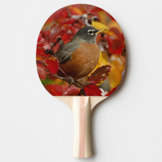 Male American Robin in Black Hawthorn 2 Ping Pong Paddle