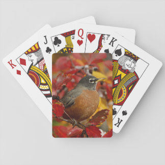 Male American Robin in Black Hawthorn 2 Playing Cards