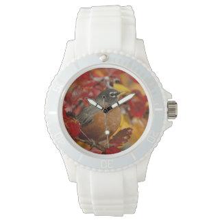 Male American Robin in Black Hawthorn 2 Watch