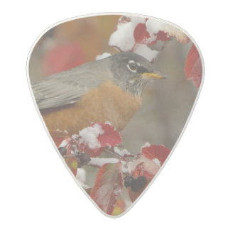 Male American Robin in Black Hawthorn Acetal Guitar Pick
