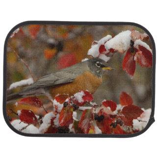 Male American Robin in Black Hawthorn Car Mat