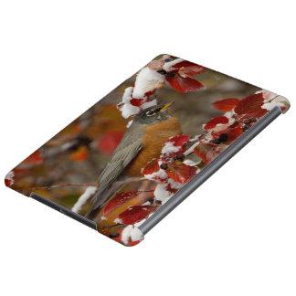 Male American Robin in Black Hawthorn Case For iPad Air