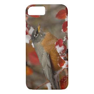 Male American Robin in Black Hawthorn iPhone 8/7 Case