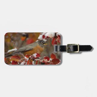 Male American Robin in Black Hawthorn Luggage Tag