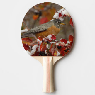Male American Robin in Black Hawthorn Ping Pong Paddle