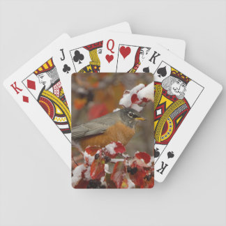 Male American Robin in Black Hawthorn Playing Cards