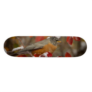 Male American Robin in Black Hawthorn Skate Board Decks