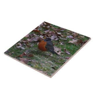 Male American Robin Large Square Tile