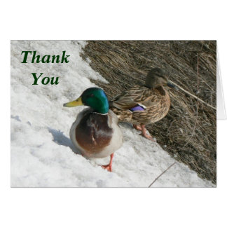 male and female mallards on snow thank you note note card