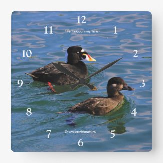Male and Female Surf Scoter Ducks at the Pier Square Wall Clock
