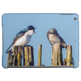 Male and female Tree Swallow