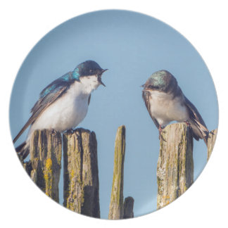 Male and female Tree Swallow Plate