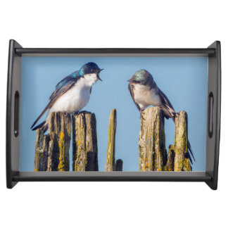 Male and female Tree Swallow Serving Tray