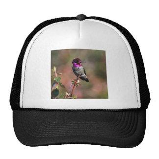 Male Anna's Hummingbird Trucker Hats