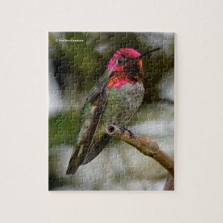 Male Anna's Hummingbird on the Kiwi Branch Puzzle