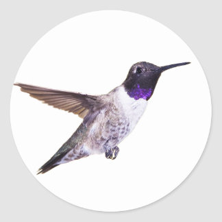 Male Black-chinned Hummingbird sticker