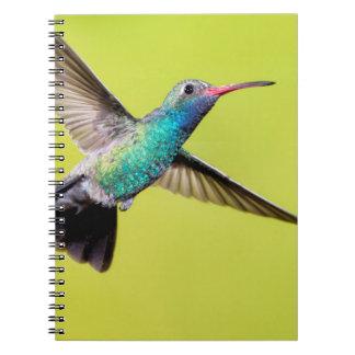 Male broad-billed hummingbird in flight notebook