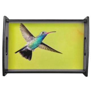 Male broad-billed hummingbird in flight serving tray
