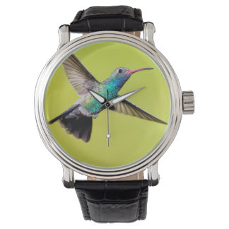 Male broad-billed hummingbird in flight watch