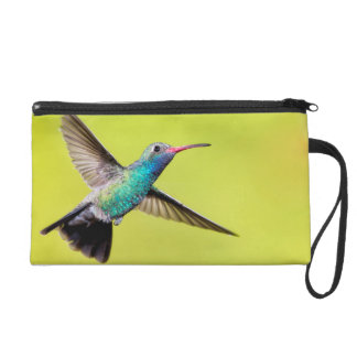 Male broad-billed hummingbird in flight wristlet clutch