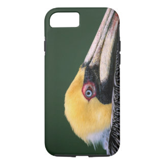 Male Brown Pelican (Pelecanus occidentalis) in iPhone 8/7 Case