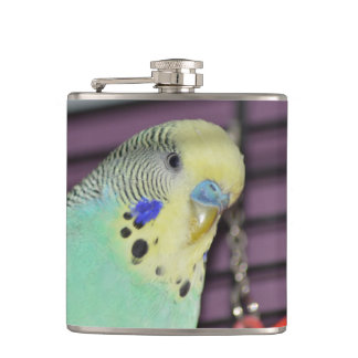 Male Budgie/ Parakeet Flask