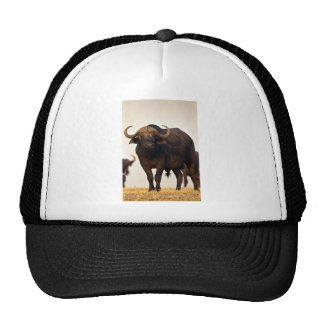 Male buffalo mesh hat