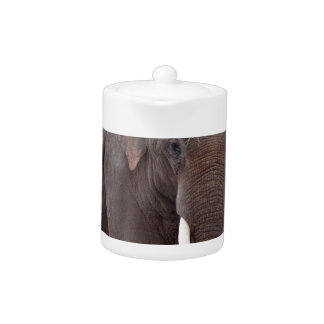 Male bull elephant