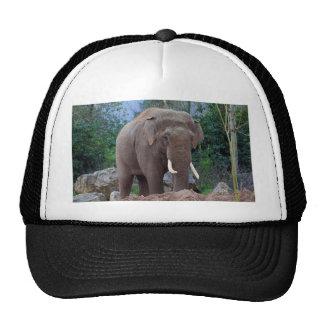 Male bull elephant cap