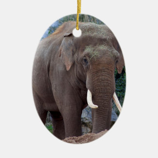 Male bull elephant ceramic oval decoration