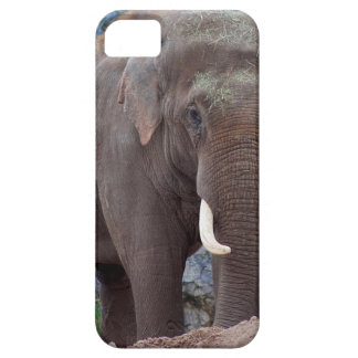 Male bull elephant iPhone 5 cover