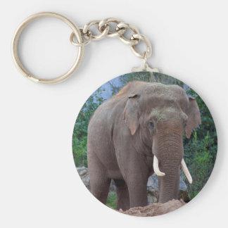 Male bull elephant key ring