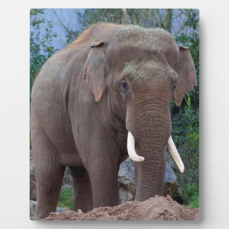 Male bull elephant plaque
