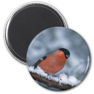Male Bullfinch in the Snow Magnet