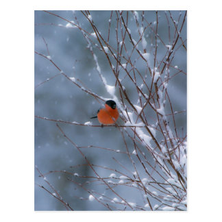 Male Bullfinch in the Snow Post Card