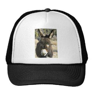 Male burro mesh hat