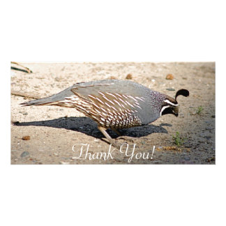 Male California Quail Extends Short Tail Personalised Photo Card