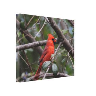 Male Cardinal 2 Canvas Print