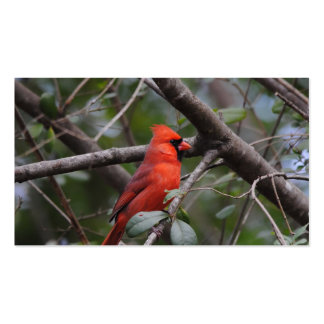 Male Cardinal 2 Pack Of Standard Business Cards