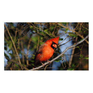 Male Cardinal 4 Pack Of Standard Business Cards