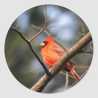 Male Cardinal 5 Round Sticker
