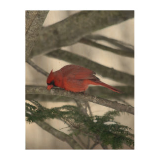 Male Cardinal After Dinner Wood Canvas