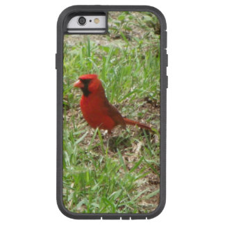 Male Cardinal Case-Mate Tough Xtreme iPhone 6 Case