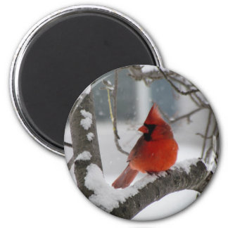 Male Cardinal Magnet