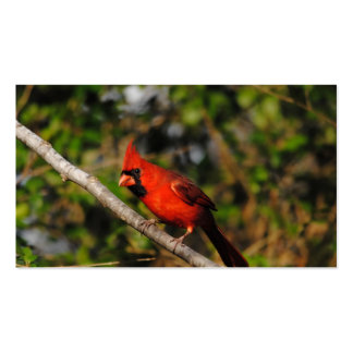 Male Cardinal Pack Of Standard Business Cards