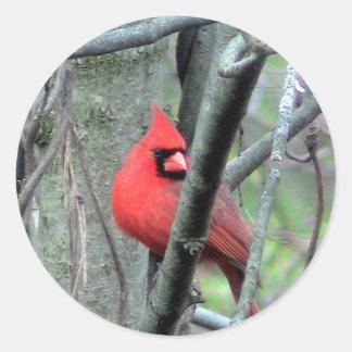 Male Cardinal Photo Sticker
