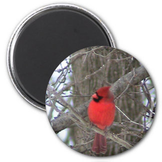 Male Cardinal side view Magnet